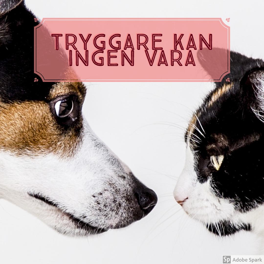 """""""Tryggare kan ingen vara"""" står det över bild på hund och katt i profil."""