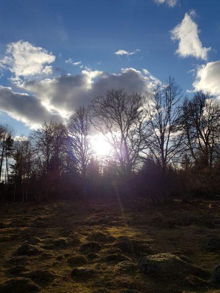 Solnedgång över en beteshage där solen sträcker sig genom träden. Himlen är blå men luften är kylig. Det var första arbetsveckan.