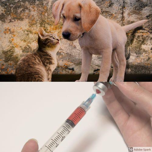 Kattunge och valp i övre delen av bilden. I nedre delen en vaccinspruta, kanske med vaccin mot kennelhosta.