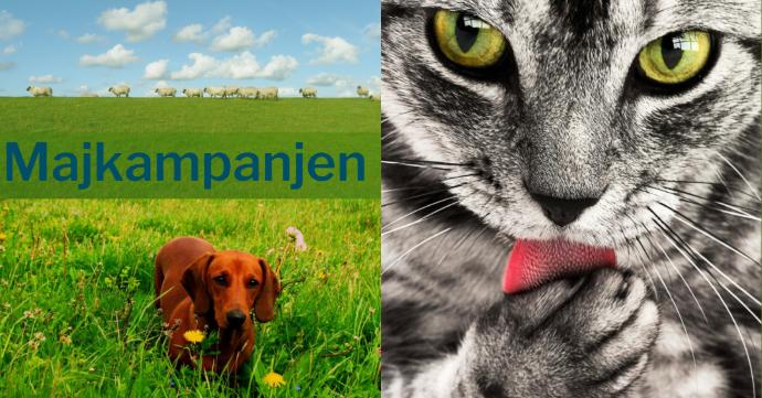 Tredelad bild med en fårflock i övre vänstra hörnet, en brun släthårig hund i nedre vänstra hörnet och en grå katt till höger i bild. Majkampanjen gäller 1-31 maj 2019.