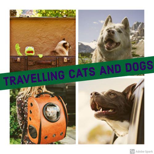 Collage av bilder på katter och hundar på resa. Travelling cats and dogs står det i en grön skylt tvärs över. Före utlandsresa måste de vaccineras mot rabies.