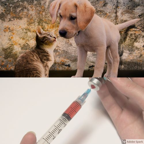 En kattunge och en valp nosar på varandra i övre delen av bilen. I undre delen en spruta med uppdraget vaccin, kanske vaccin mot rabies.
