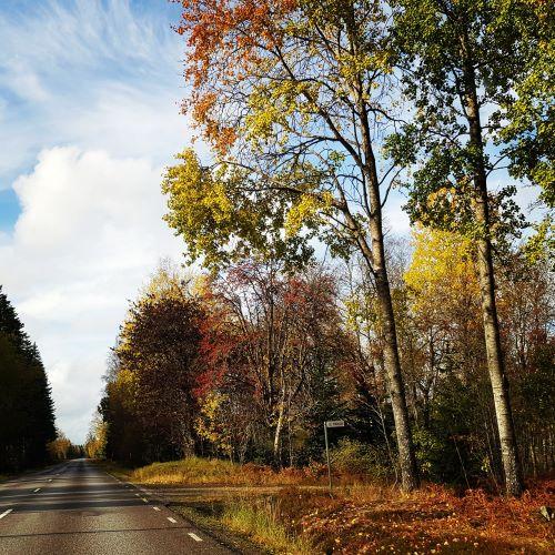 Färgsprakande höstlöv och blå himmel utmed en väg. Ena dagen sol och nästa dag höststorm.