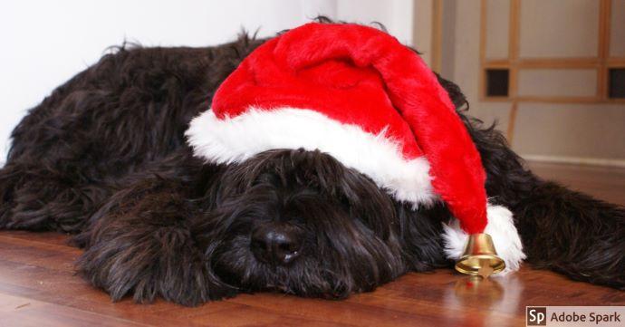 Svartbrun hund som har en tomteluva på sig. Hunden ligger och sover. Nu är vi redan i december och det närmar sig jul.