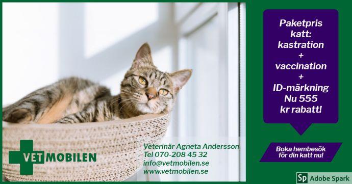 """En ung spräcklig katt ligger bekvämt i en kort. Texten """"Paketpris katt: kastration + vaccination + ID-märkning. Nu 555 kr rabatt!"""" Det är kampanjen som börjar i januari."""
